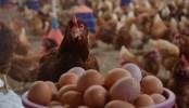 Kümes hayvancılığı üretimi istatistikleri açıklandı